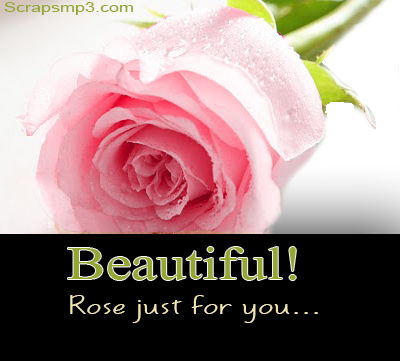 Beautiful Pictures Of Roses For Facebook