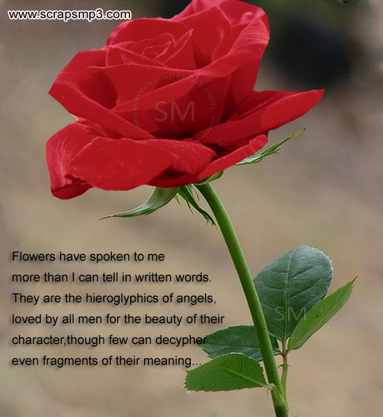 rose image for orkut,facebook.myspace,friendster