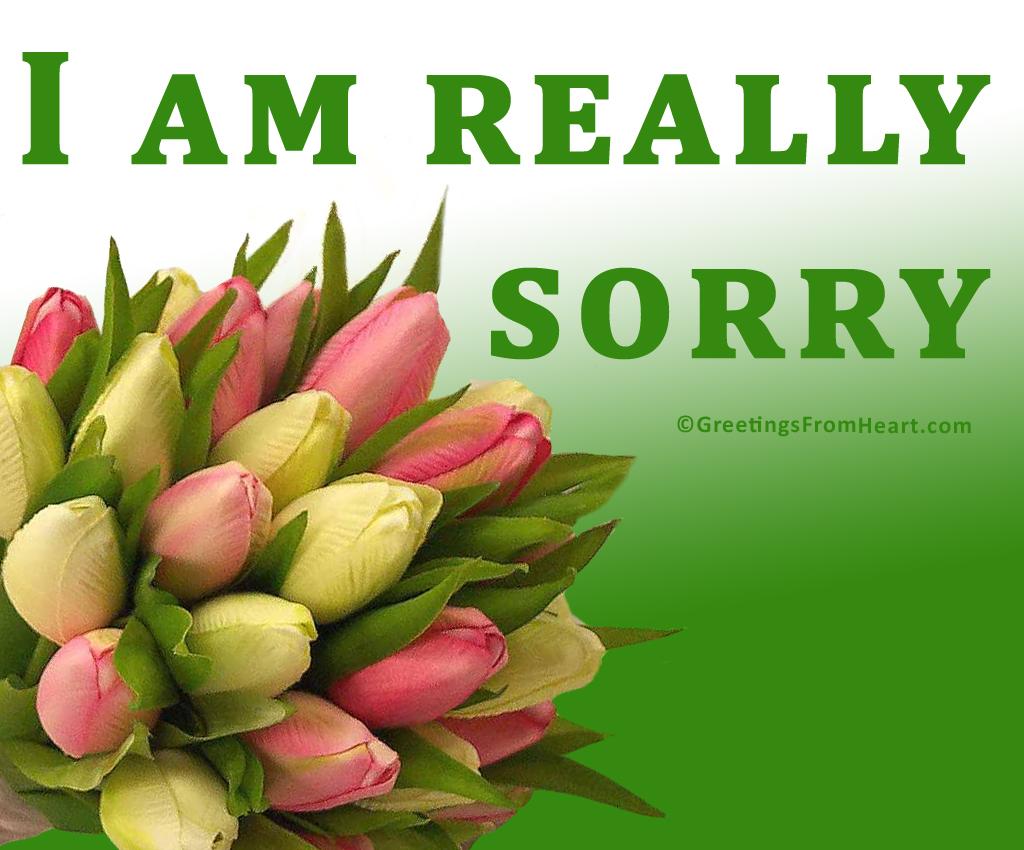 i am really sorry